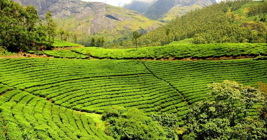 Tempat wisata di bandung yang murah meriah - Kebun teh sukawana